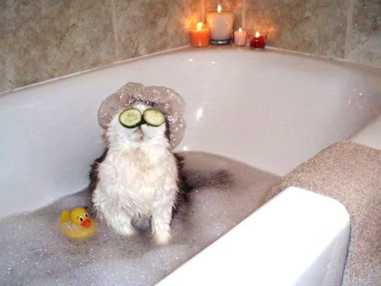 забавная кошка в ванне с маской из огурцов на глазах